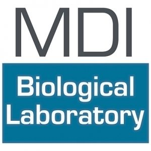 MDI Biological Laboratory